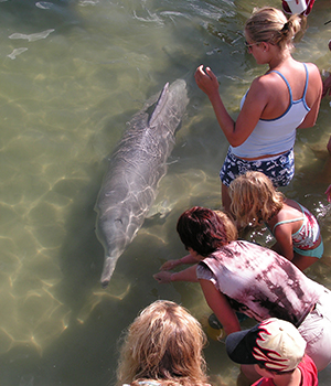Tin Can Bay - Dolphin Feeding